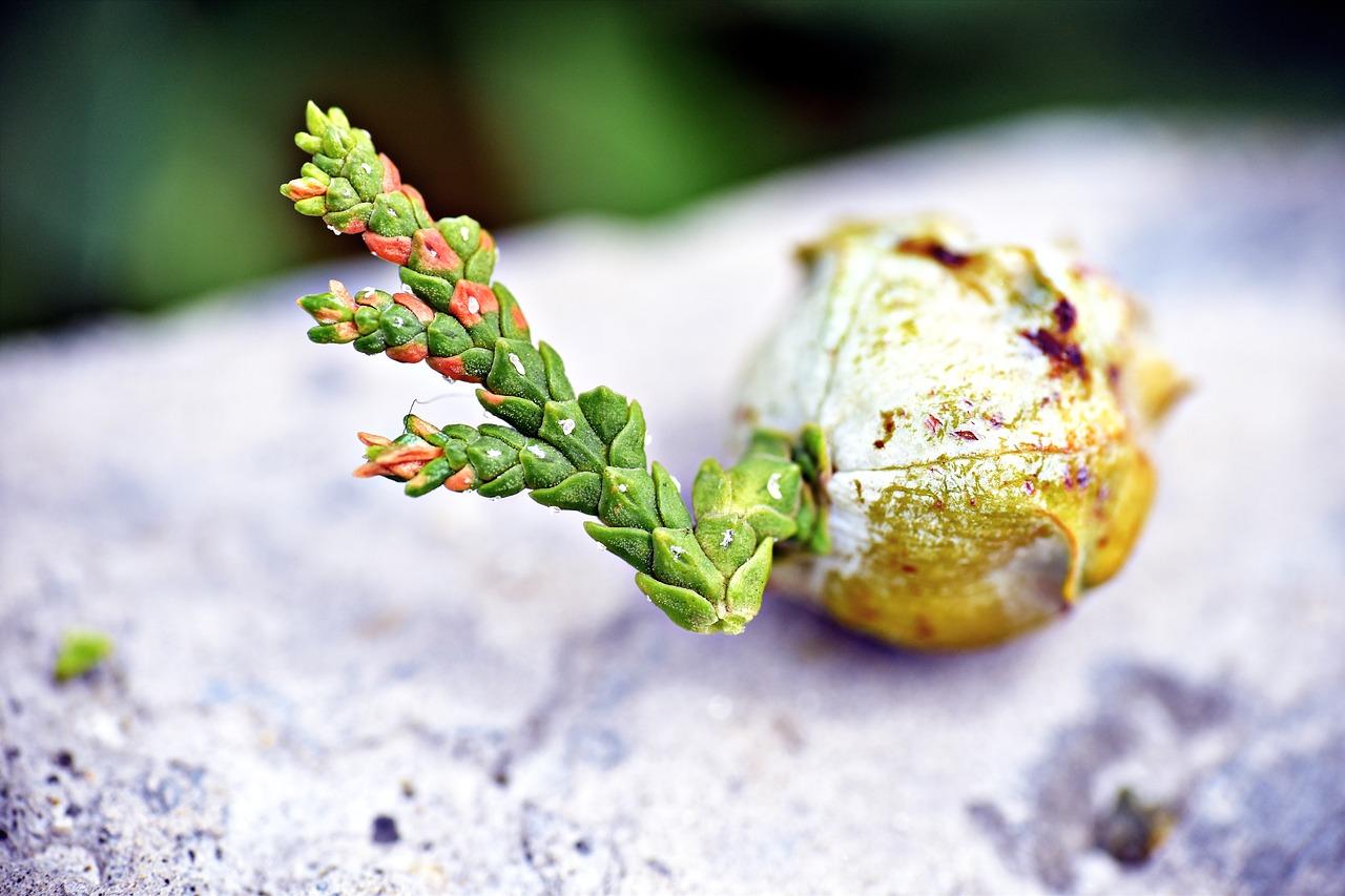 Lebensbaum in der Homöopathie