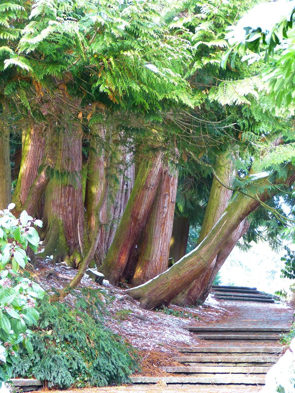 Lebensbaum Holz